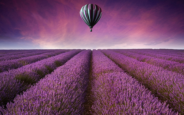 cool-flower-field-wallpaper-13401-13999-hd-wallpapers